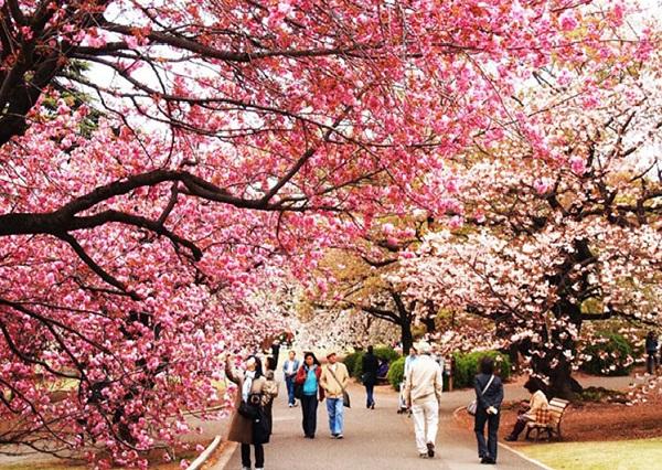 Văn hóa Nhật Bản