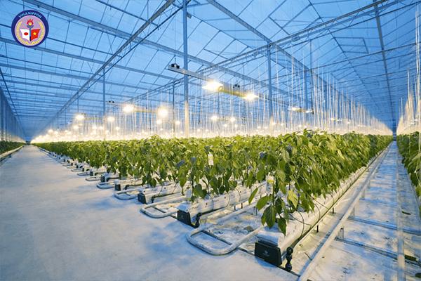 Đơn hàng trồng và chăm sóc hoa, cây cảnh trong nhà kính